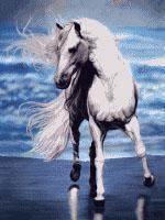 پکیج آموزش قالیبافی طرح اسب آبی